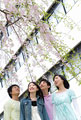 タイトル:枝垂桜と若者