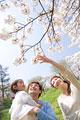 タイトル:桜を見上げる家族