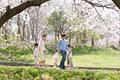 タイトル:桜の下を歩く家族