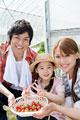 タイトル:イチゴ摘みをする家族