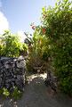 タイトル:竹富島