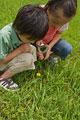 タイトル:虫眼鏡を使う子供たち
