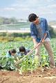 タイトル:畑を耕す父と子供2人