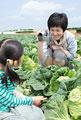 タイトル:キャベツ畑で娘を撮影する母