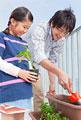 タイトル:プランターに植物を植える父と子