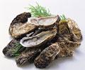 タイトル:牡蠣