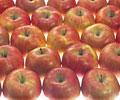 タイトル:リンゴ
