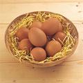 タイトル:鶏卵