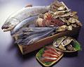 タイトル:鮮魚いろいろ