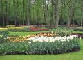 タイトル:キューケンホフ公園の花壇