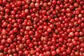 タイトル:一面の赤胡椒