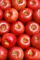 タイトル:一面のふじリンゴ