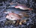タイトル:魚介類集合 (クルマエビ・タイ・ブリ・サバ・アジ・イカ・サザエ)