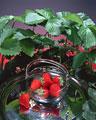 タイトル:ガラスの器の中のイチゴ