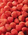 タイトル:一面のイチゴ