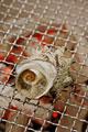 タイトル:サザエのつぼ焼き