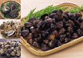 タイトル:貝の集合イメージ・コラージュ