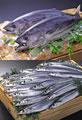 タイトル:鮮魚のイメージ・コラージュ