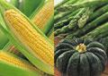 タイトル:野菜のイメージ・コラージュ