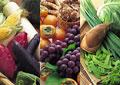 タイトル:季節の野菜イメージ・コラージュ