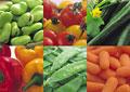 タイトル:野菜の集合イメージ・コラージュ