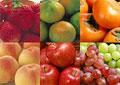 タイトル:果物の集合イメージ・コラージュ
