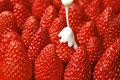 タイトル:一面のイチゴに練乳をかける(紅ほっぺ)
