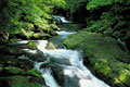 タイトル:菊池渓谷