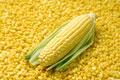 タイトル:一面のトウモロコシと1本のトウモロコシ
