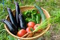 タイトル:夏野菜集合