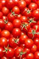 タイトル:一面のミニトマト