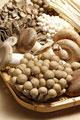 タイトル:5種類のキノコ