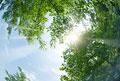 タイトル:新緑・陽射しイメージ