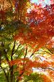 タイトル:紅葉・秋・もみじ・自然・イメージフォト