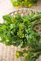タイトル:菜の花