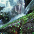 タイトル:渓流