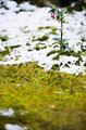 タイトル:苔庭と雪