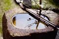 タイトル:手水鉢