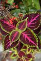 タイトル:観葉植物