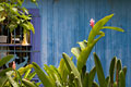 タイトル:建物と植物