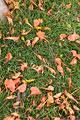 タイトル:草の上に落ちた花びら