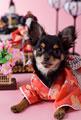 タイトル:チワワのひな祭りイメージ