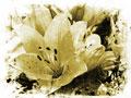 タイトル:花