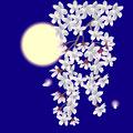 タイトル:月と夜桜