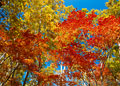 タイトル:志賀高原の紅葉