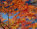 タイトル:志賀高原琵琶池の紅葉