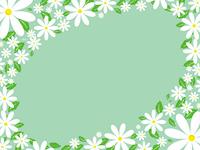 daisy border