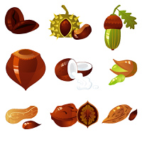 nuts collection, vector illustration