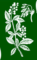 vector illustration of the plant of the barberry