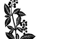 vector illustration sheet plants on white background